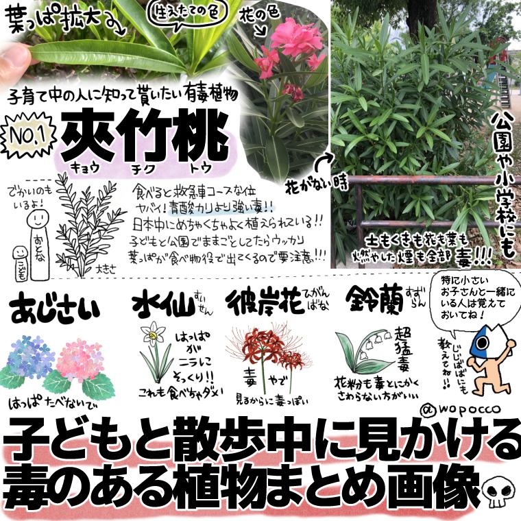 散歩でよく見かける夾竹桃(キョウチクトウ)、紫陽花、水仙、彼岸花、鈴蘭は食べないように気をつけましょう!